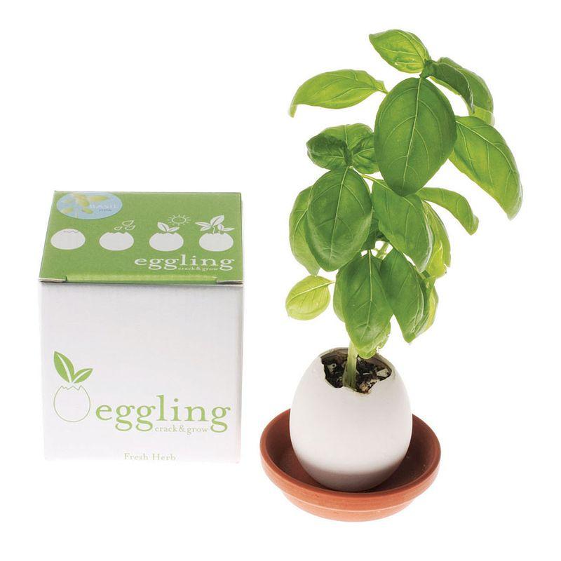 Eggling_basil_box