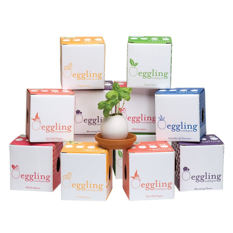 Eggling_Package_All
