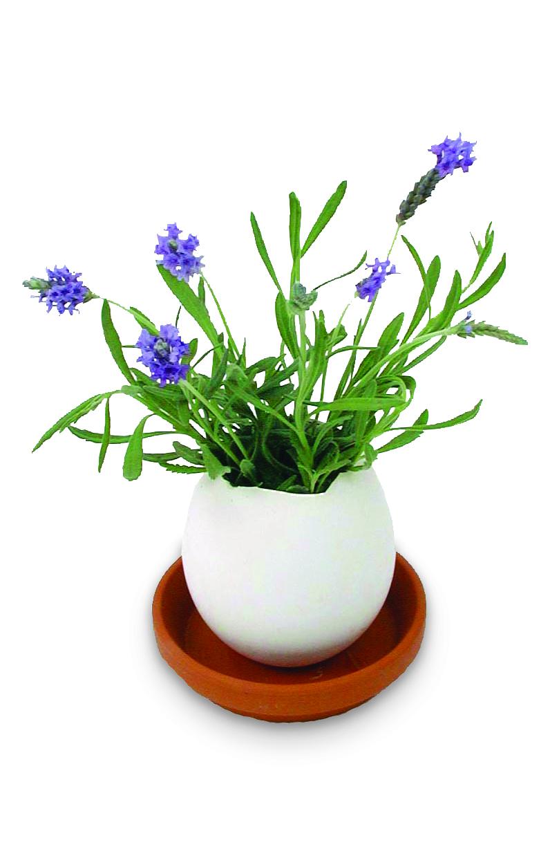 Pâques-Eggling_Plant_Lavender