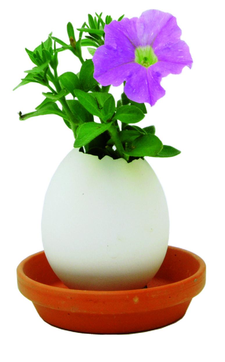 Pâques-oeuf-petunia